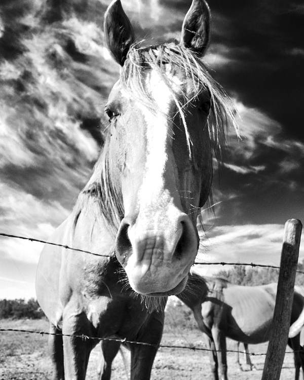 Horse Poster featuring the photograph Curiosity by Alisa Andersen