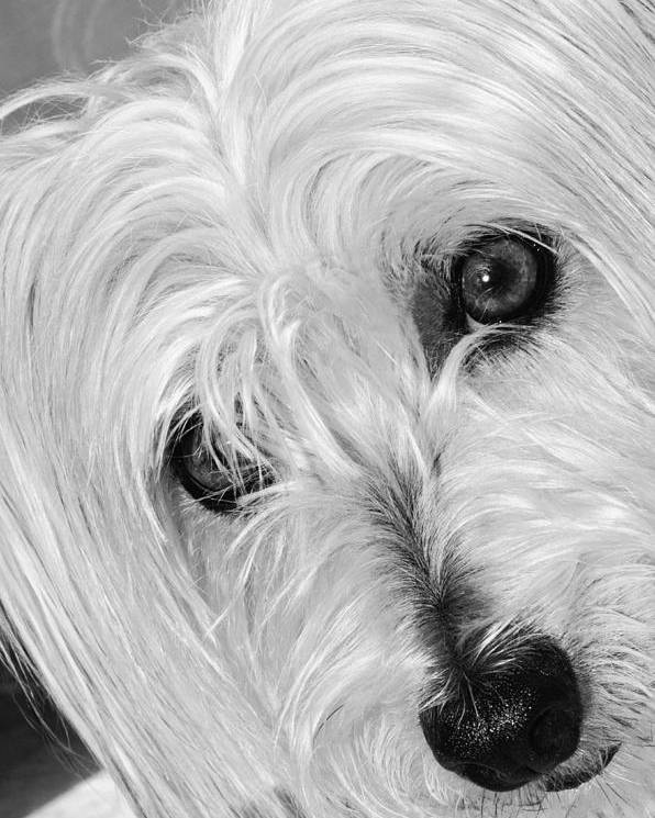 Dog Poster featuring the photograph Cute Dog by Imagevixen Photography