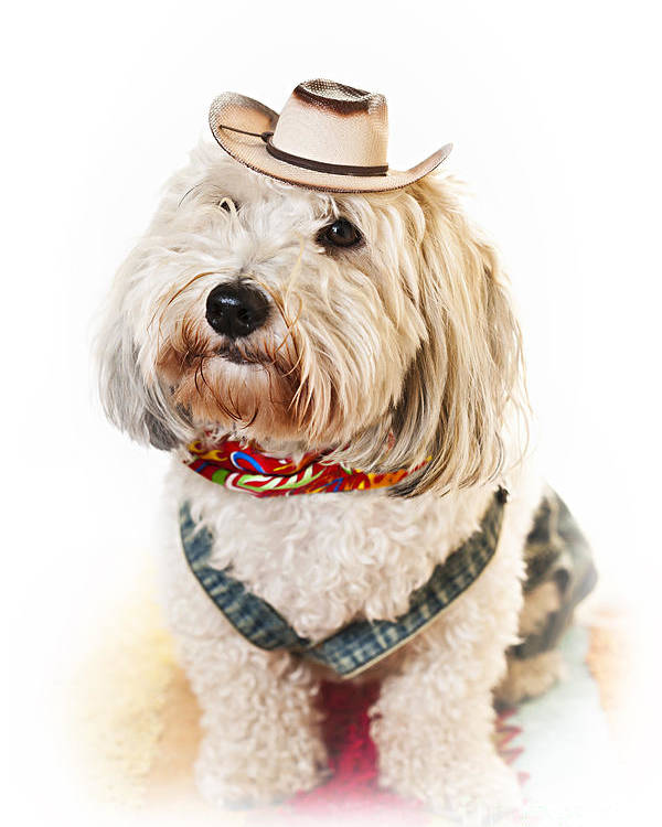 Dog Poster featuring the photograph Cute Dog In Halloween Cowboy Costume by Elena Elisseeva