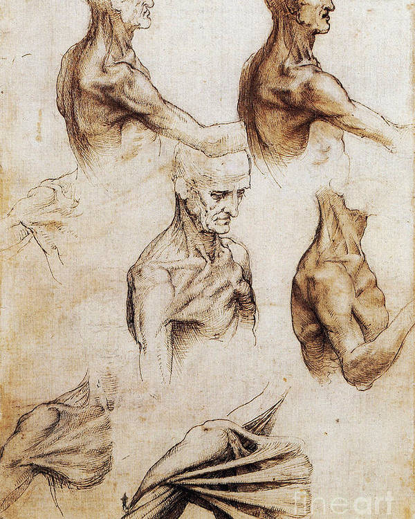 Da Vinci Anatomical Drawings Poster By Science Source