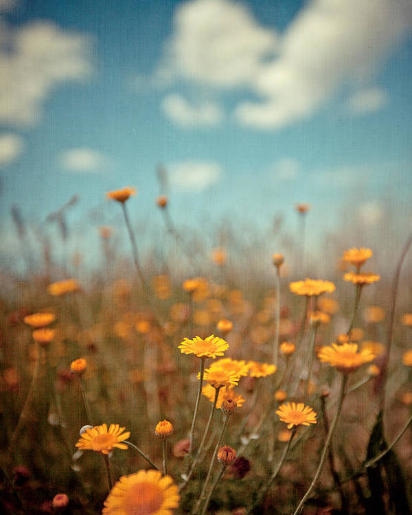 Vertical Poster featuring the photograph Daisy Meadow by Boston Thek Imagery