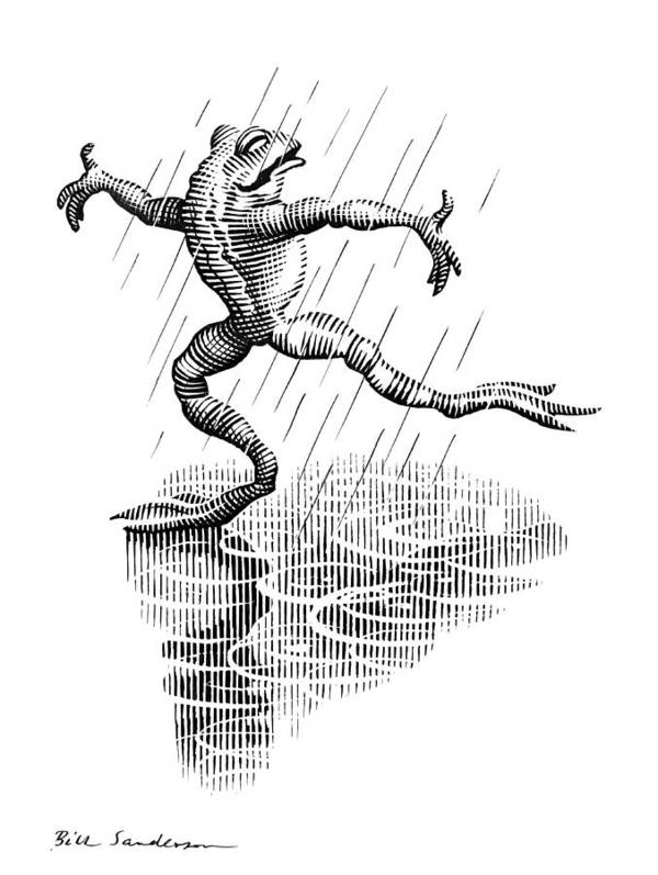 Common Frog Poster featuring the photograph Dancing In The Rain, Conceptual Artwork by Bill Sanderson