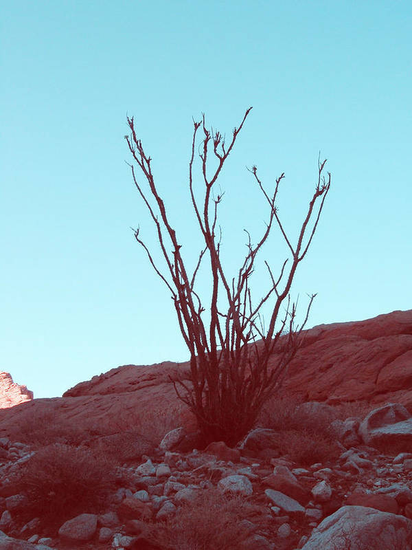 Nature Poster featuring the photograph Desert Plant by Naxart Studio