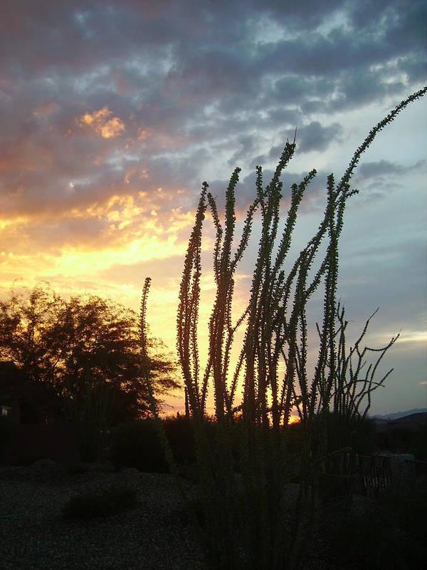 Desert Poster featuring the photograph Desert Sunset Ocotillos by Fran Loando