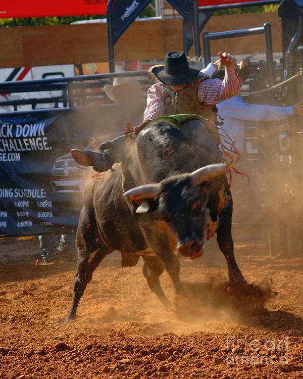 Cowboy Poster featuring the photograph Determination by Gib Martinez