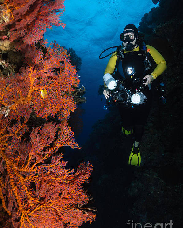 Diver Poster featuring the photograph Diver And Sea Fans, Fiji by Todd Winner