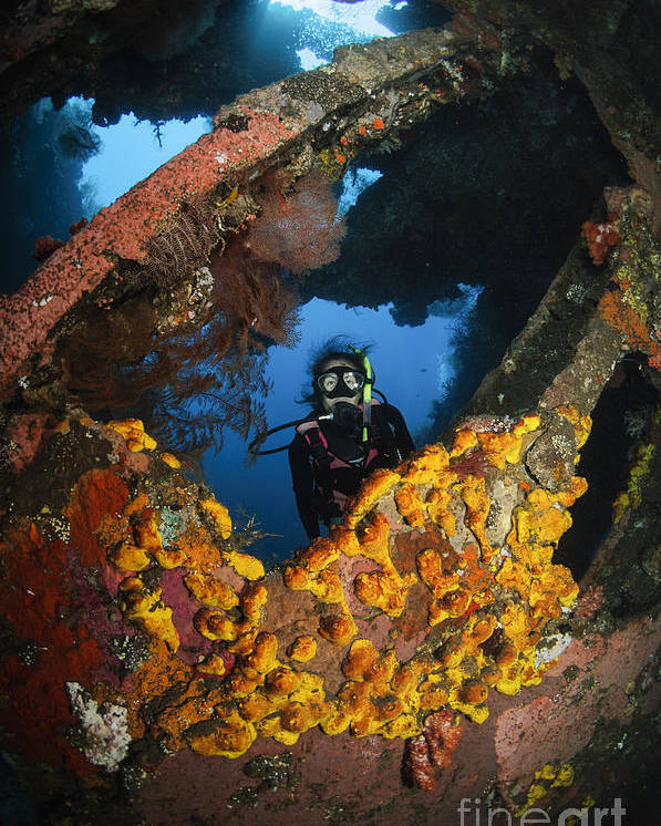 Liberty Wreck Poster featuring the photograph Diver Explores The Liberty Wreck, Bali by Todd Winner