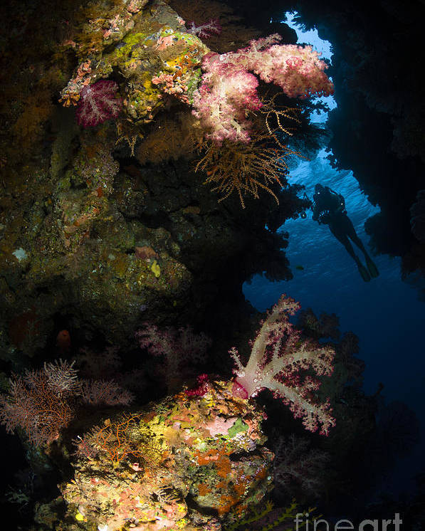 Diver Poster featuring the photograph Diver In Soft Coral Seascape, Fiji by Todd Winner