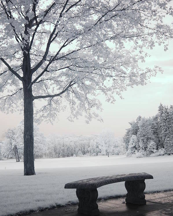 Infrared Photography Poster featuring the photograph Dreamy White Blue Infrared Michigan Landscape by Kathy Fornal