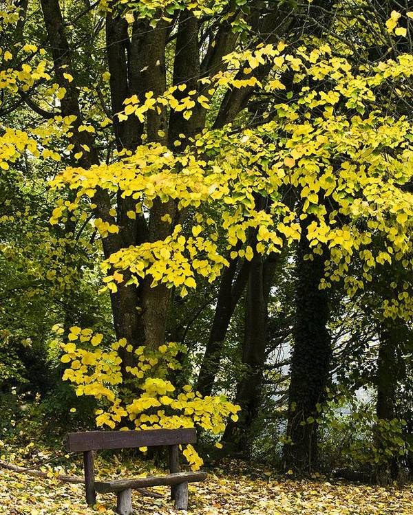 Autumn Poster featuring the photograph Dun Na Ri Forest Park, County Cavan by Peter McCabe