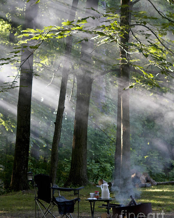 Woods Poster featuring the photograph Early Morning by Brenda Carpenter