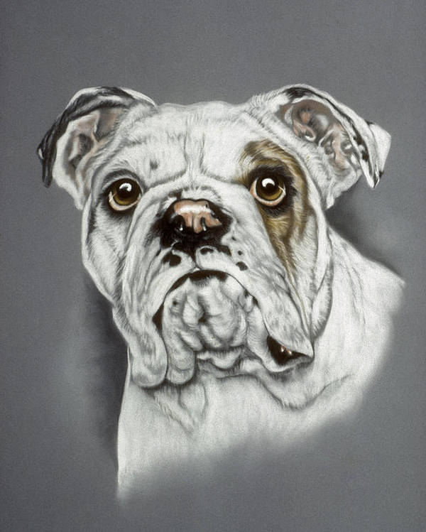 Dog Poster featuring the pastel English Bulldog by Patricia Ivy