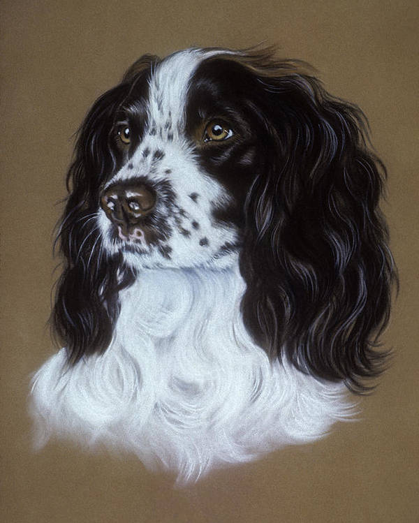 Dog Poster featuring the pastel English Cocker Spaniel by Patricia Ivy