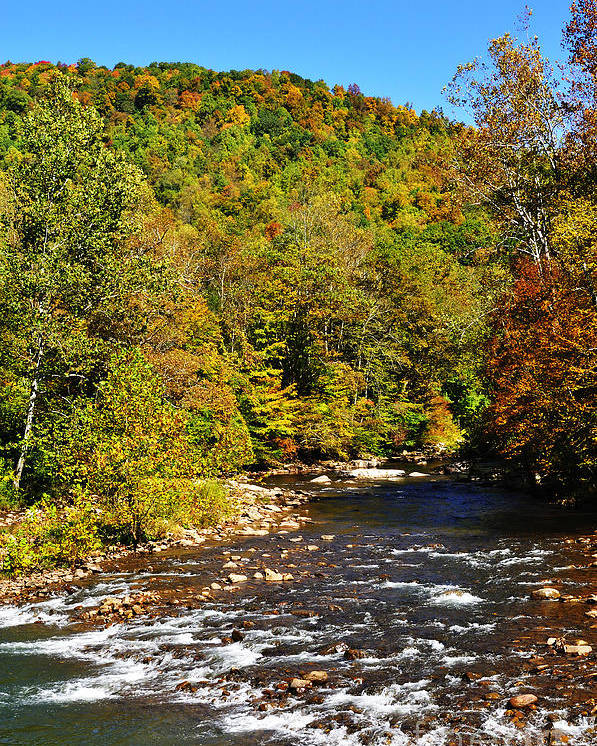 Elk River Poster featuring the photograph Fall Along Elk River by Thomas R Fletcher