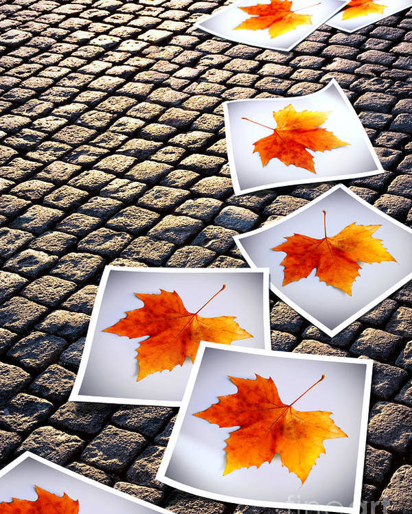 Abstract Poster featuring the photograph Fallen Autumn Prints by Carlos Caetano