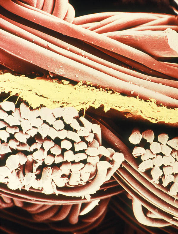 Magnified Image Poster featuring the photograph False-colour Sem Of The Fabric Gore-tex by Dr Jeremy Burgess