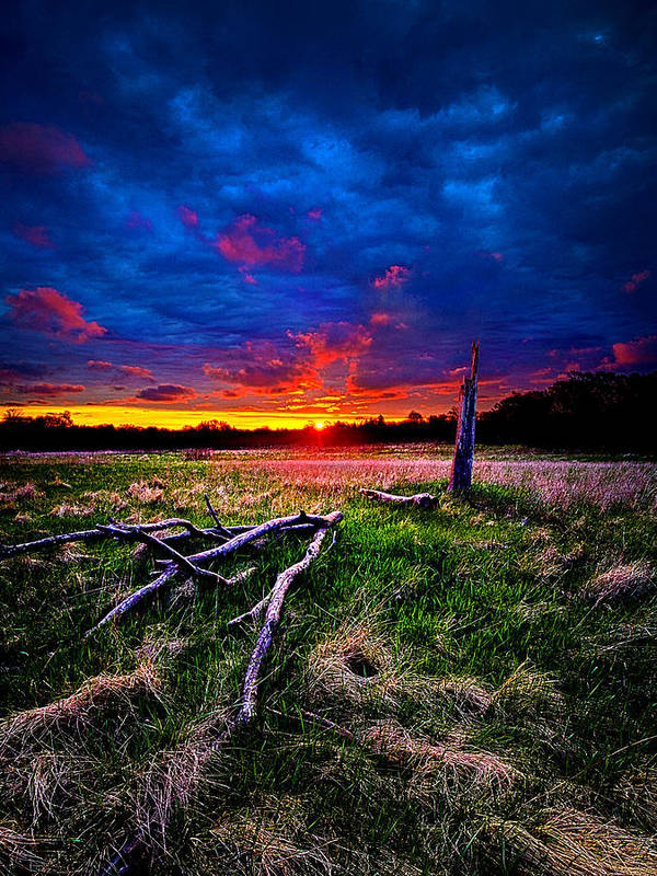 Horizons Poster featuring the photograph Firewood by Phil Koch