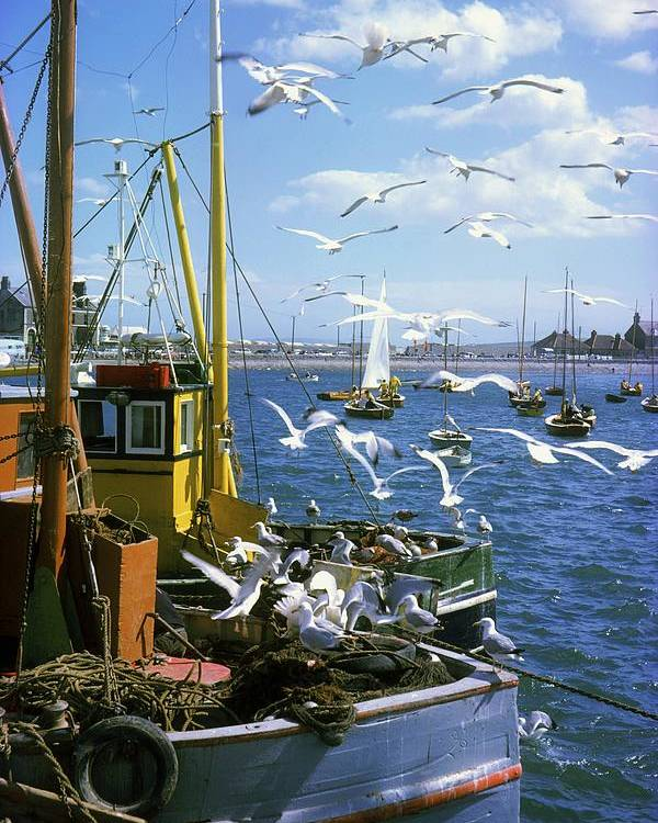 Bay Poster featuring the photograph Fishing Boat by The Irish Image Collection