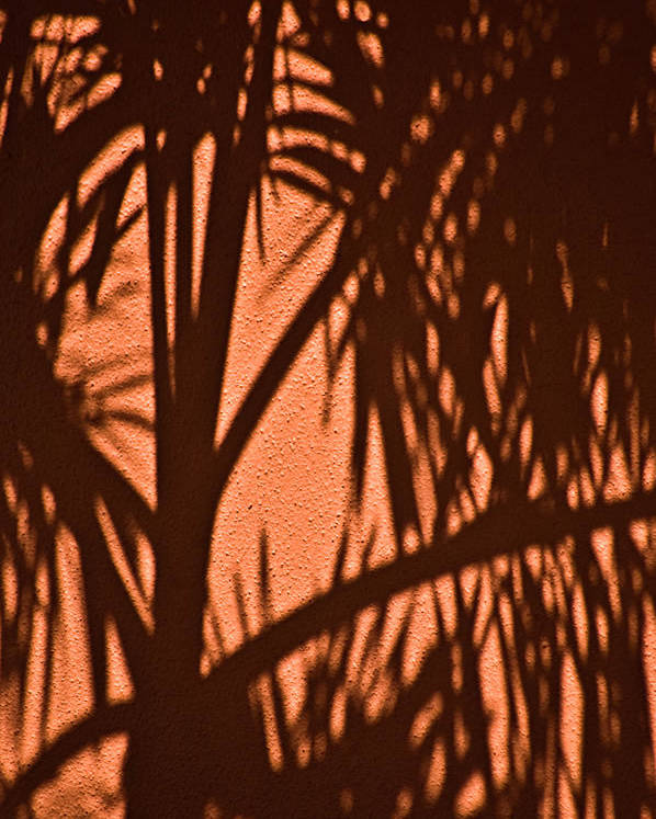Palm Frond Poster featuring the photograph Florida Palm Shadow by Carolyn Marshall