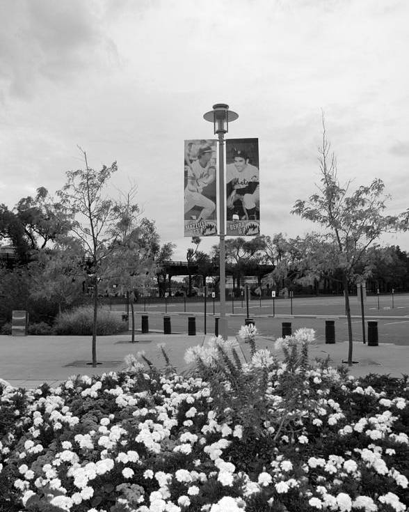 Shea Stadium Poster featuring the photograph Flowers At Citi Field In Black And White by Rob Hans