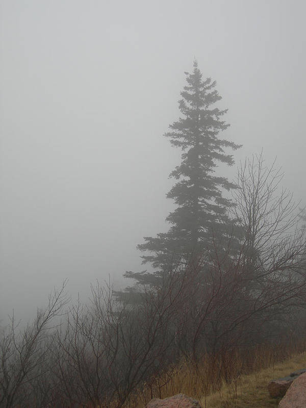 Maine Poster featuring the photograph Foggy Sentinel by Skip Willits