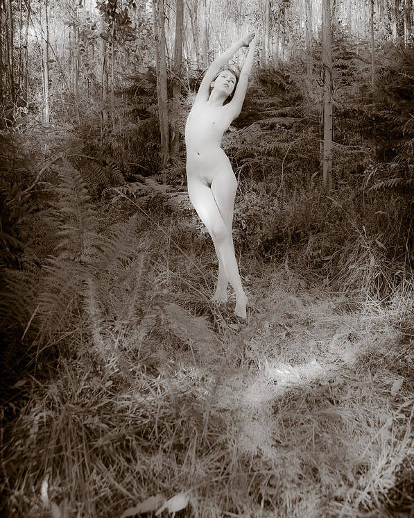 Women Poster featuring the photograph Forest by Jose Francisco Arias