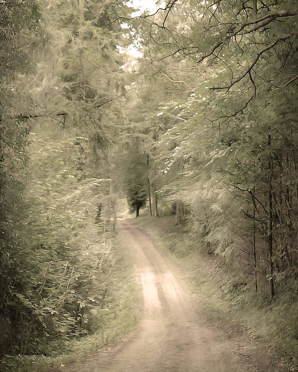 Afraid Poster featuring the photograph Forest Path by Svetlana Sewell