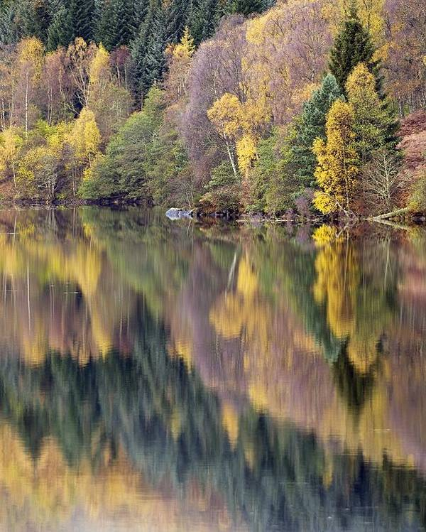 Larch Poster featuring the photograph Forest Reflected In A Loch by Adrian Bicker