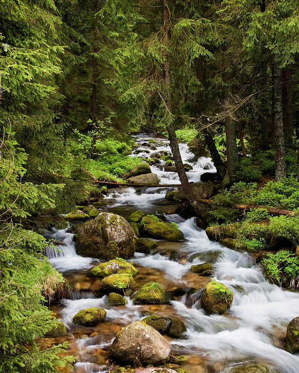 Beautiful Poster featuring the photograph Forest Stream In Tatra Mountains by Artur Bogacki
