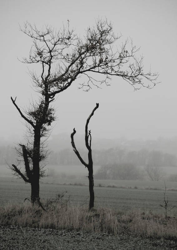 Trees Poster featuring the photograph Frail Sentinels by Odd Jeppesen