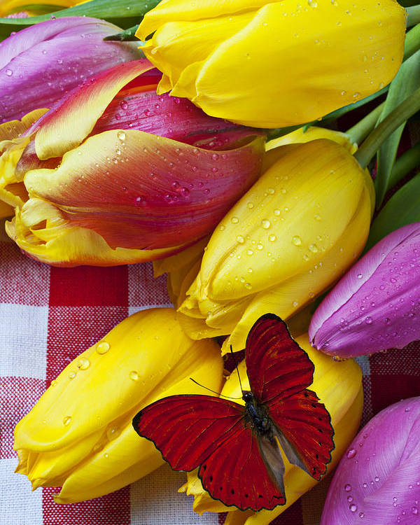 Red Poster featuring the photograph Fresh Tulips And Red Butterfly by Garry Gay