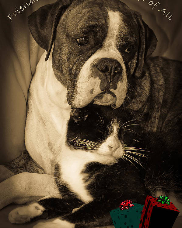 Boxer Poster featuring the photograph Friendship Is The Greatest Gift Of All Greeting by DigiArt Diaries by Vicky B Fuller