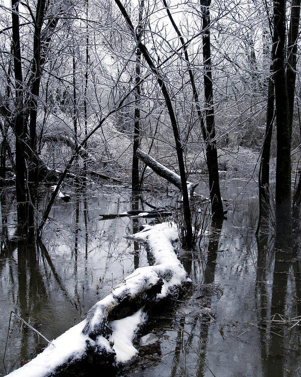 Nature Poster featuring the photograph Frozen Lanscape 2 by Travis Garwood