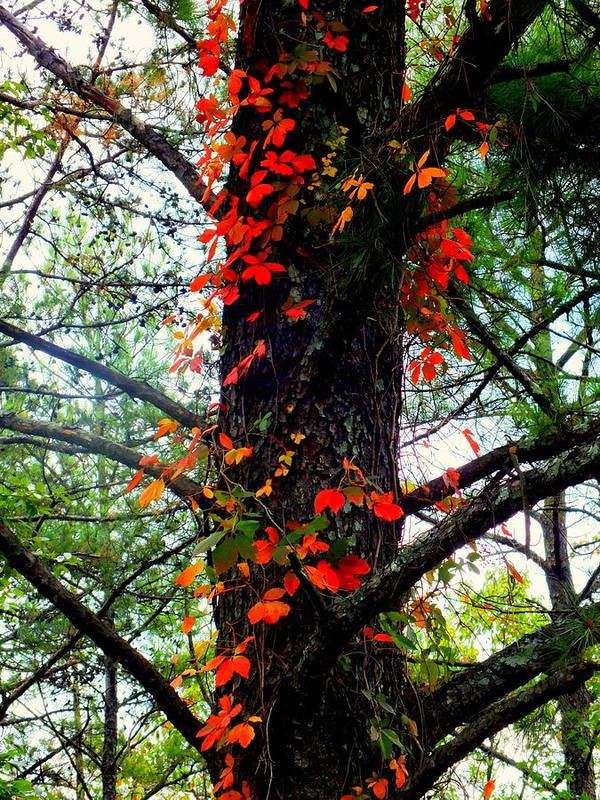 Autumn Poster featuring the photograph Garland Of Autumn by Karen Wiles