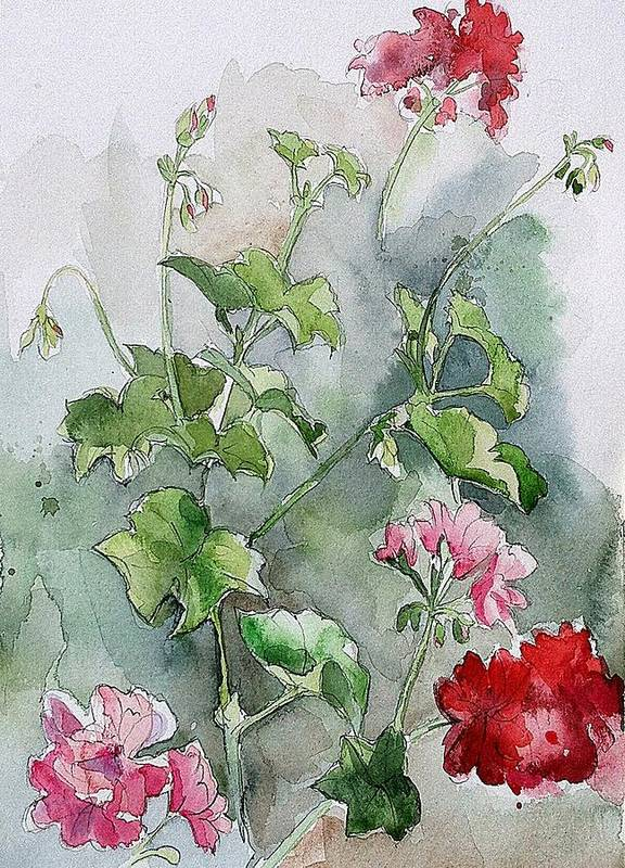 Watercolour Poster featuring the painting Geraniums by Stephanie Aarons