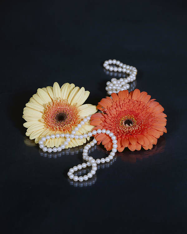 Gerbera Poster featuring the photograph Gerberas With Pearls by Joana Kruse