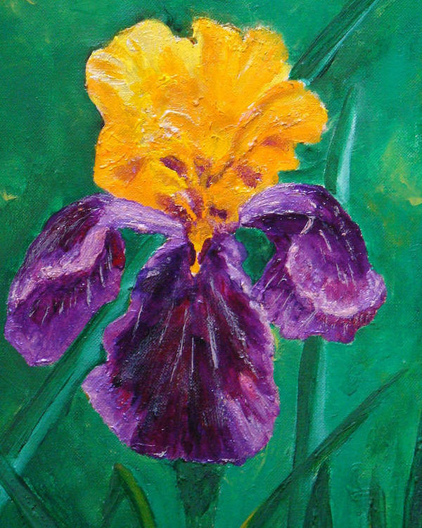 Yellow And Purple Iris Poster featuring the painting German Iris by Marney Smithies