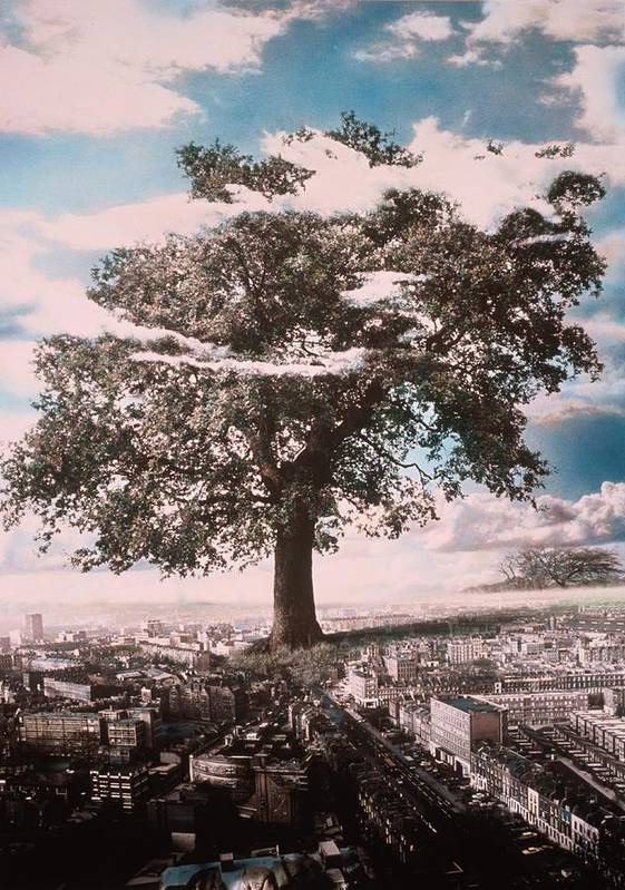 Giant Tree In City Poster featuring the photograph Giant Tree In City by Hag