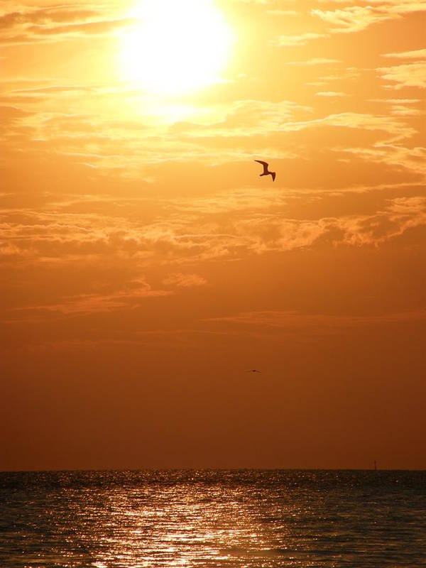Sunset Poster featuring the photograph Golden Flight by Kimberly Mohlenhoff
