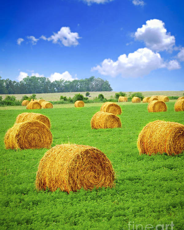 Agriculture Poster featuring the photograph Golden Hay Bales In Green Field by Elena Elisseeva
