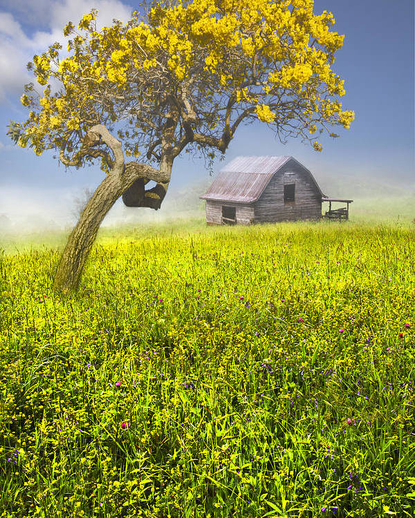 Appalachia Poster featuring the photograph Good Morning Spring by Debra and Dave Vanderlaan