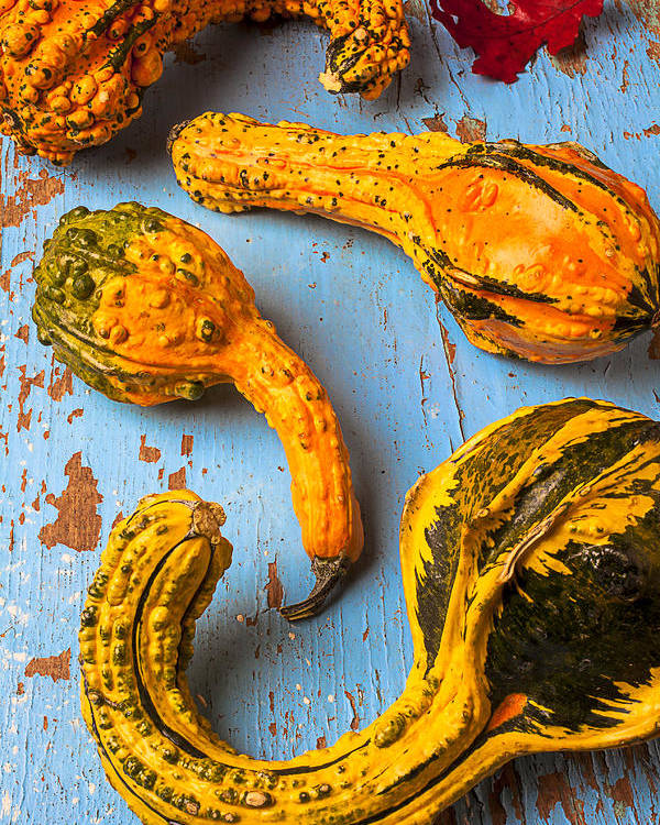 Gourd Poster featuring the photograph Gourds On Wooden Blue Board by Garry Gay