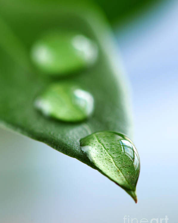 Leaf Poster featuring the photograph Green Leaf With Water Drops by Elena Elisseeva