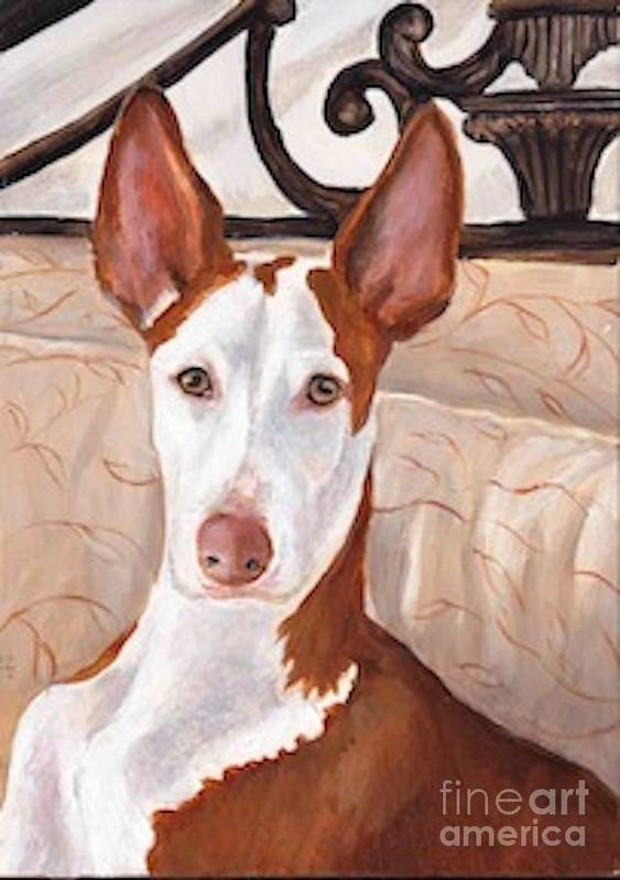 Ibizan Hound Poster featuring the painting Halen by Charlotte Yealey