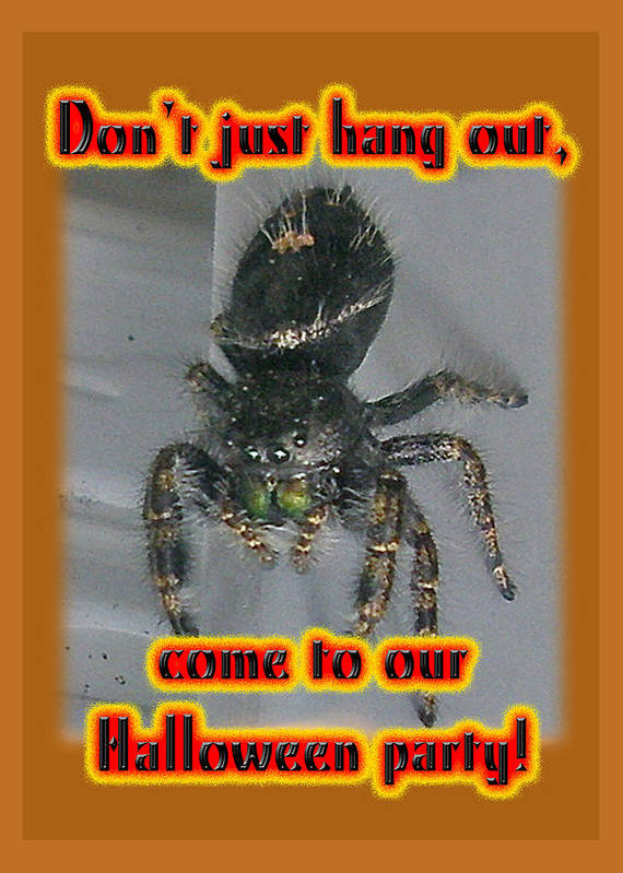 Halloween Poster featuring the photograph Halloween Party Invitation - Salticid Jumping Spider by Mother Nature