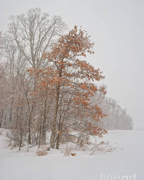 Winter Poster featuring the photograph Hanging On by Pamela Baker