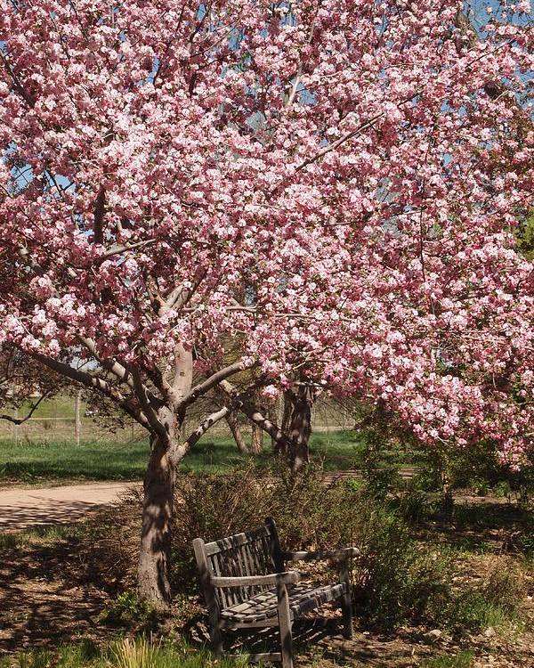 Cherry Blossoms Poster featuring the photograph Have A Rest by Joyce Specht