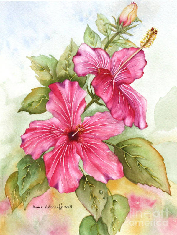 Floral Poster featuring the painting Hibiscus by Grace Ashcraft