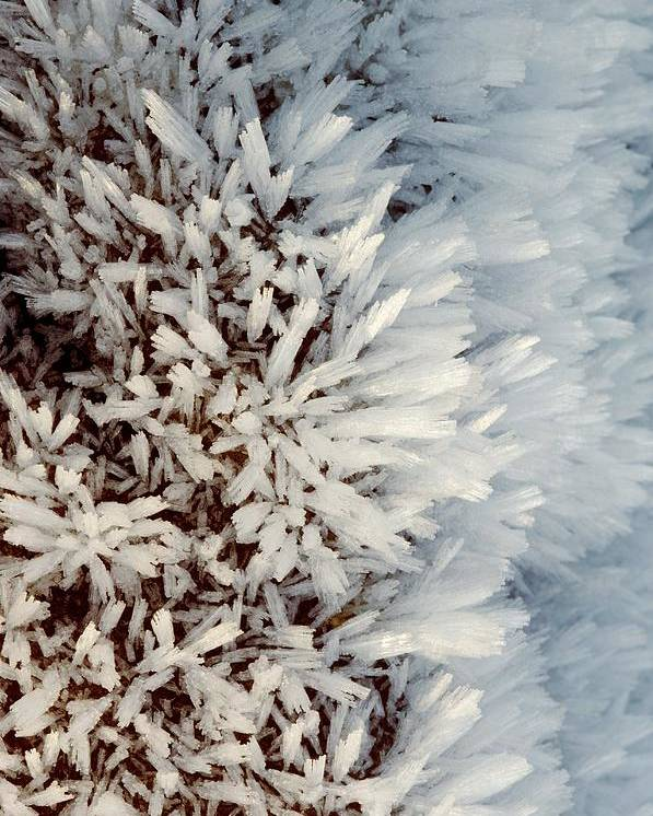 Hoar Frost Poster featuring the photograph Hoar Frost Crystals On A Rock by Duncan Shaw