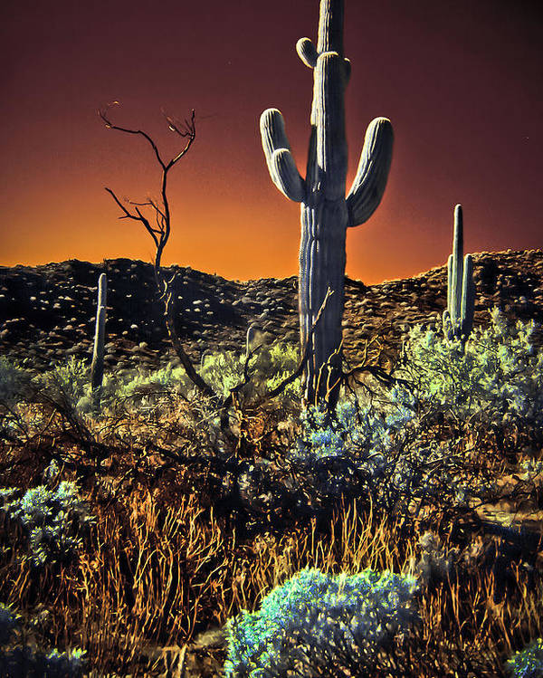 Infrared Poster featuring the photograph Infrared Saguaro 2 by Jim Painter